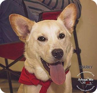Corgi/Labrador Retriever Mix Puppy for adoption in Cincinnati, Ohio - Sparky