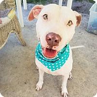 Adopt A Pet :: Alabama - Umatilla, FL