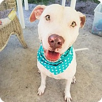 Terrier (Unknown Type, Medium) Mix Dog for adoption in Umatilla, Florida - Alabama