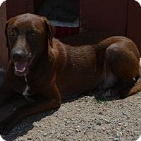 Adopt A Pet :: Dani - Peyton, CO