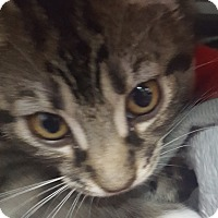 Adopt A Pet :: Guinevere - Hallandale, FL