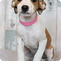 Adopt A Pet :: Ariel - Waldorf, MD