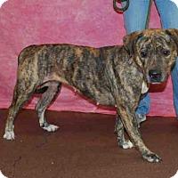 Adopt A Pet :: SASHA - Louisville, KY