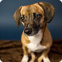 Adopt A Pet :: Mommas - Seattle, WA