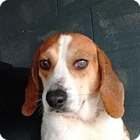 Adopt A Pet :: Ammo - Shelter Island, NY