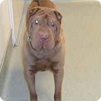 Adopt A Pet :: Rocky - Wildomar, CA