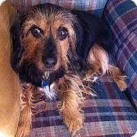 Adopt A Pet :: Abbie - CUMMING, GA