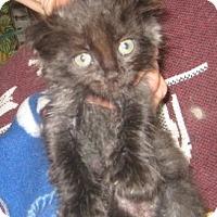Adopt A Pet :: Martouf - Dallas, TX