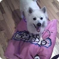 Adopt A Pet :: Benji - selden, NY