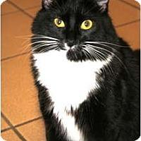 Adopt A Pet :: Tux - Bonita Springs, FL