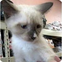 Adopt A Pet :: Jonah - Jacksonville, FL