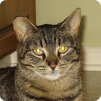 Adopt A Pet :: CHLOE - Hamilton, NJ