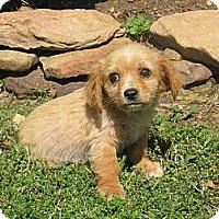 Adopt A Pet :: Sadie - Stilwell, OK
