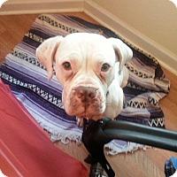 Adopt A Pet :: Liberty - Chicago, IL