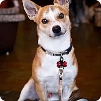 Adopt A Pet :: Barkley - Orange, CA