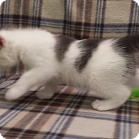 Adopt A Pet :: Missy - Stafford, VA