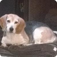 Adopt A Pet :: Dina