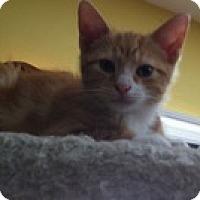 Adopt A Pet :: Lafayette - St. Louis, MO