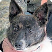Adopt A Pet :: Maddie - Germantown, MD