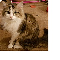 Adopt A Pet :: Oreo - Columbus, OH
