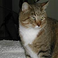Adopt A Pet :: Ghandi - Bonita Springs, FL