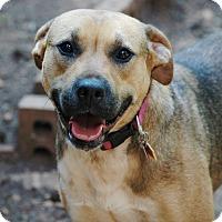 Adopt A Pet :: Heather - Lawrenceville, GA