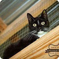 Adopt A Pet :: Boots- $25 adoption special - Monterey, VA