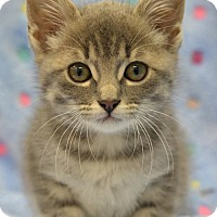 Adopt A Pet :: Carter Rabbit160942 - Atlanta, GA