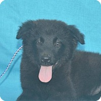 Adopt A Pet :: **WYATT** MEET AUG 27TH! - Mukwonago, WI