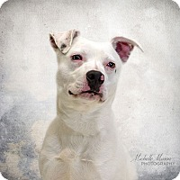 Adopt A Pet :: Powder - Naperville, IL