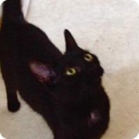 Adopt A Pet :: Cookie - Covington, KY