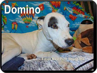 Labrador Retriever/Plott Hound Mix Puppy for adoption in Ringwood, New Jersey - Domino