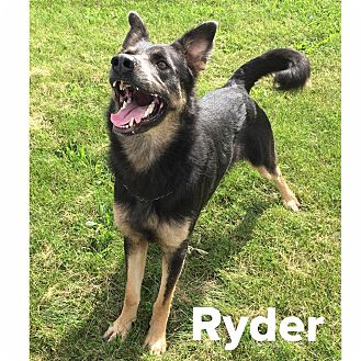 German Shepherd Dog Mix Dog for adoption in Muscatine, Iowa - Ryder
