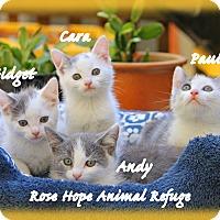 Adopt A Pet :: KITTENS - Waterbury, CT