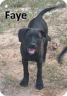 Labrador Retriever/Hound (Unknown Type) Mix Puppy for adoption in Augusta, Maine - Faye