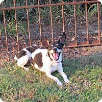 Adopt A Pet :: MARTINA ***NO ADOPTION FEE!!! - Hartford, CT