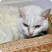 Adopt A Pet :: Albie - Greensburg, PA