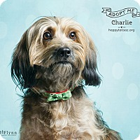 Adopt A Pet :: Charlie - Chandler, AZ