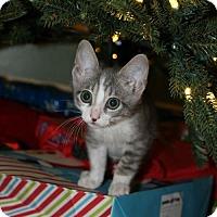Adopt A Pet :: Skye - ROSENBERG, TX