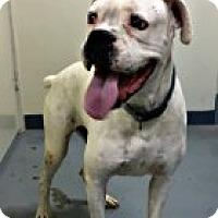 Adopt A Pet :: Bubba - Austin, TX