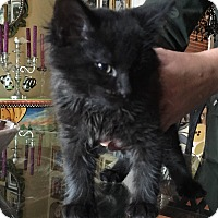 Adopt A Pet :: Penelope - Staten Island, NY