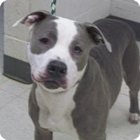 Adopt A Pet :: domino - Gulfport, MS