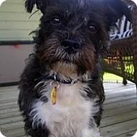 Adopt A Pet :: Addy - Toronto, ON