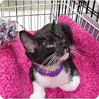 Adopt A Pet :: Winnie - The Colony, TX