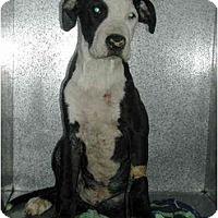 Adopt A Pet :: COURTESY Peanut - Scottsdale, AZ