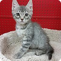 Adopt A Pet :: Flashlight - Phoenix, AZ