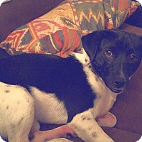 Adopt A Pet :: Mickey - Knoxville, TN