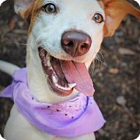 Adopt A Pet :: Kaye - Marietta, GA