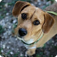 Adopt A Pet :: Mikey - Weston, FL
