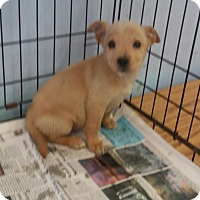 Adopt A Pet :: Lucinda - Philadelphia, PA